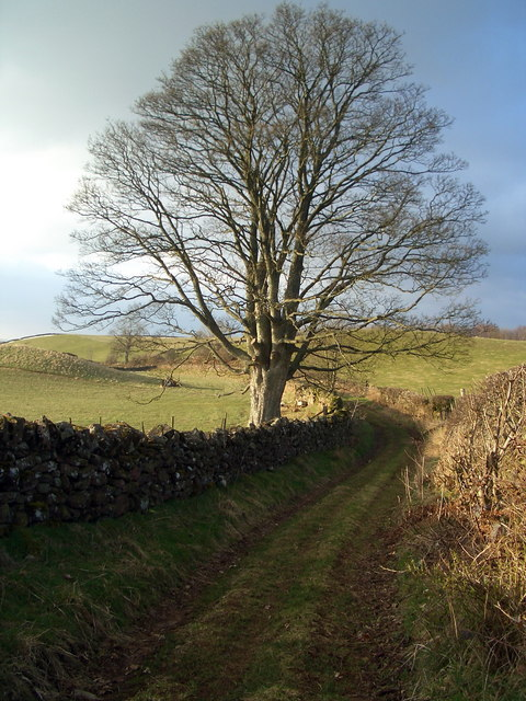 The track to Melmerby Mire