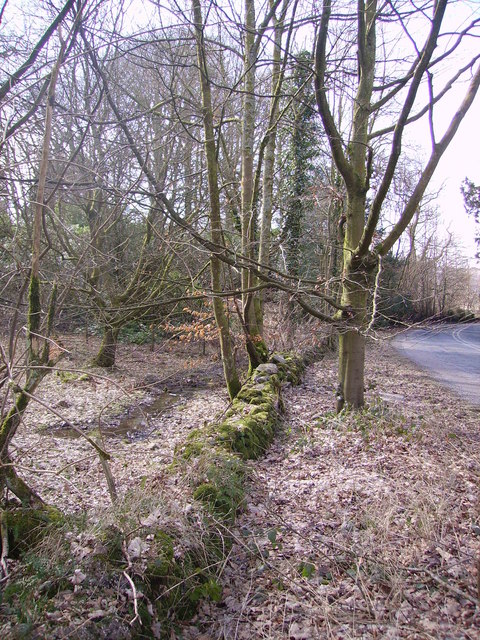 Woodland near Line Riggs