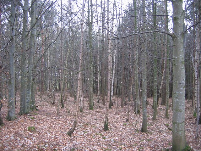 Playmuir Wood.