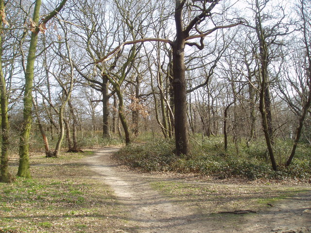 Woodland at north edge of Eltham Park, Kent