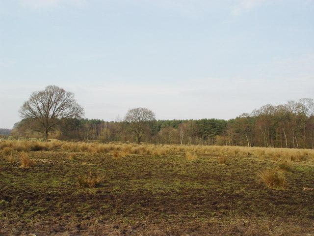 Trails Meadow