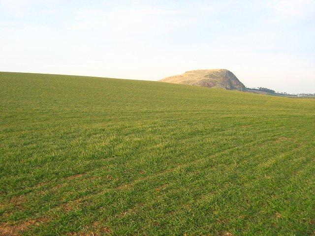Big field.