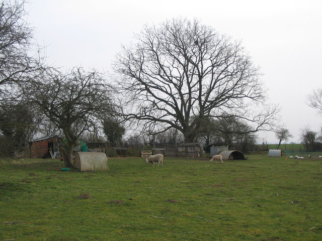 Smallholding at Bradford Leigh