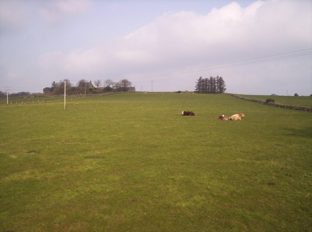 4 Cows and a Field