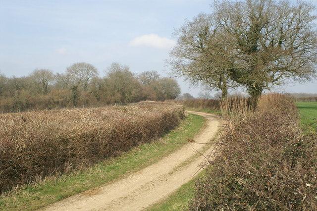 Parnell Lane