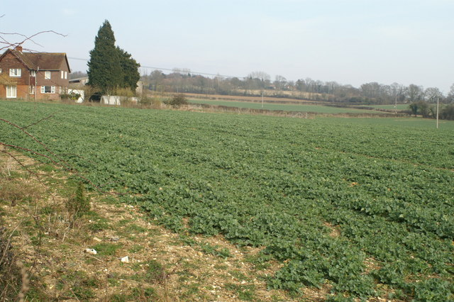 Fields west of Michelmersh