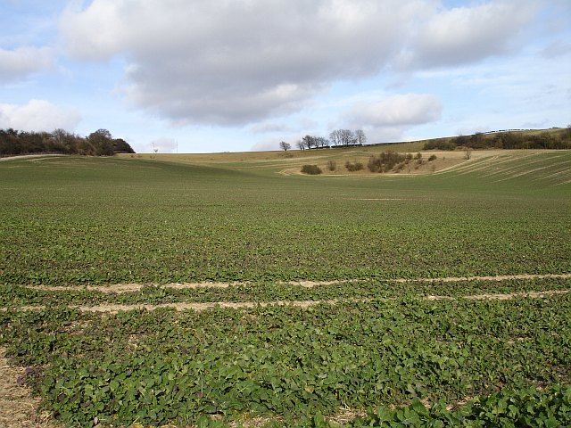 Rape field on the North Downs
