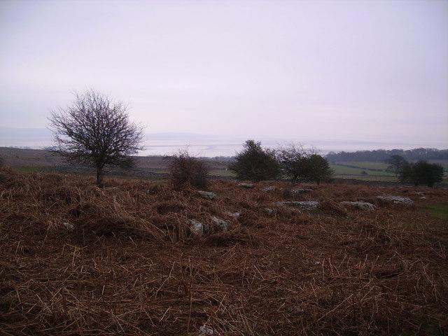 Birkrigg Common