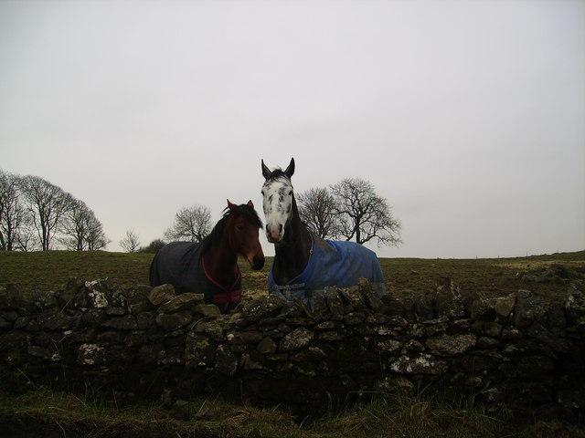 Horses near Scales