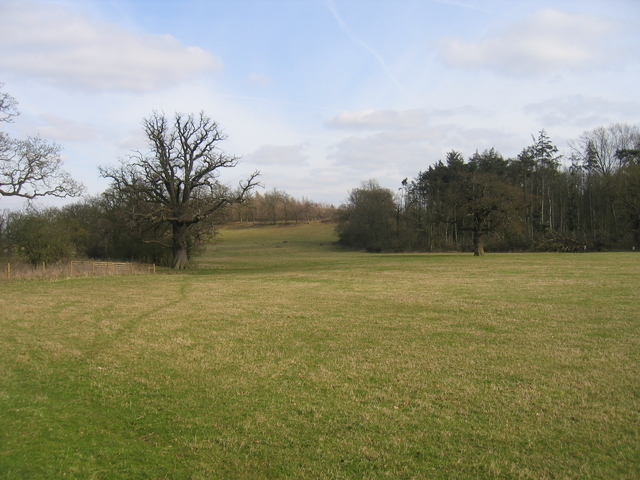 Pearson's Wood and Deerings Hill