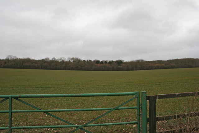 View across farmland towards woodland
