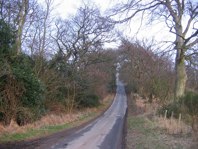 Mag's Hill