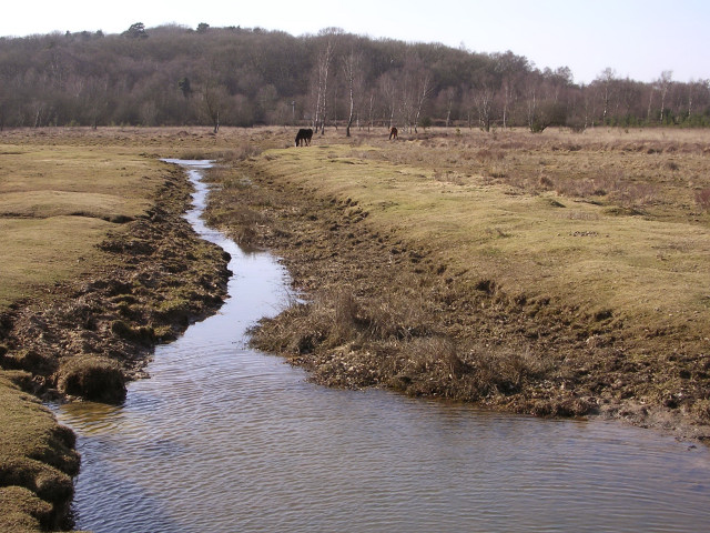Drainage ditch on Penny Moor, New Forest
