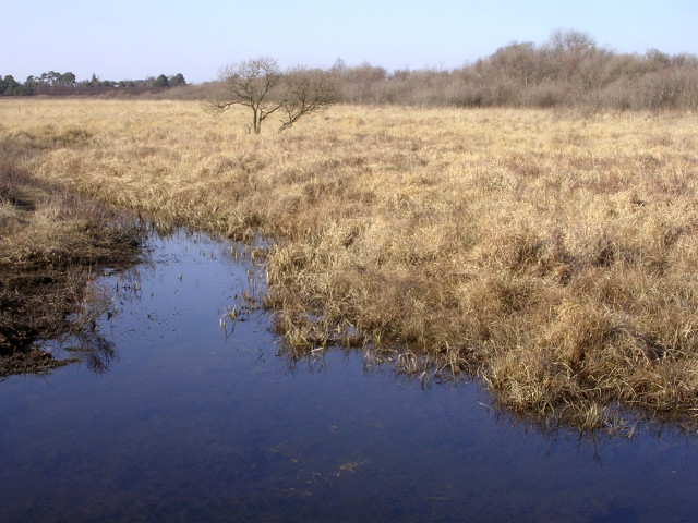 Bog in the Bishop of Winchester's Purlieu, New Forest