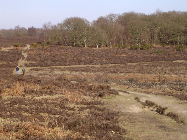 View from Lovely Hill towards Pig Bush, New Forest