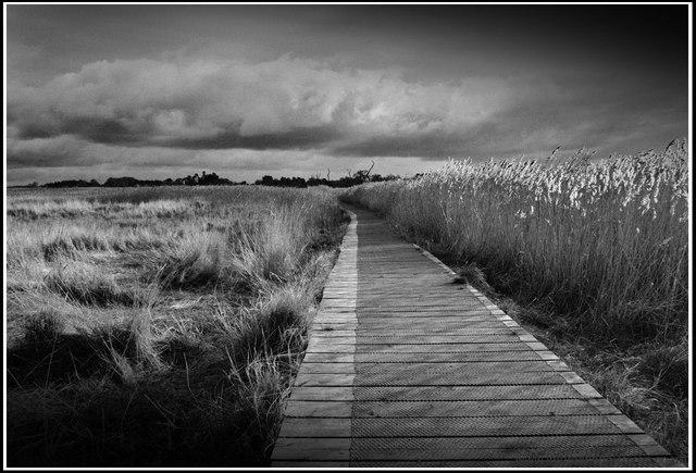 Pathway over Marshland
