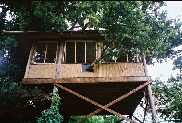 Tree House in an Exotic Garden