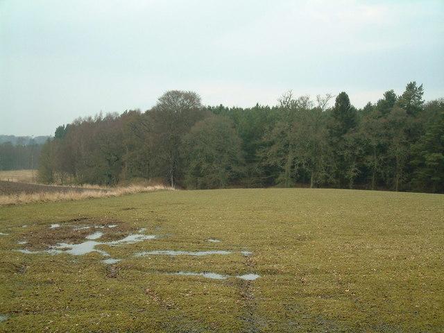 Woodland on the Dunsinnan estate