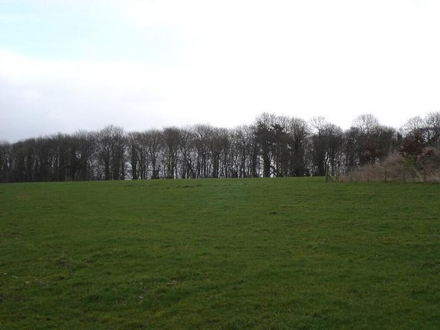 Denbigh fields