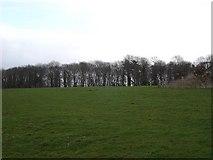 SJ0266 : Denbigh fields by Dot Potter