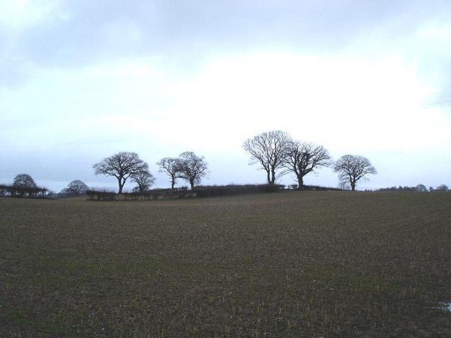 Nantglyn fields
