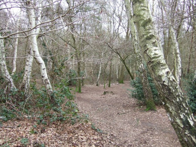 Pyrford Common