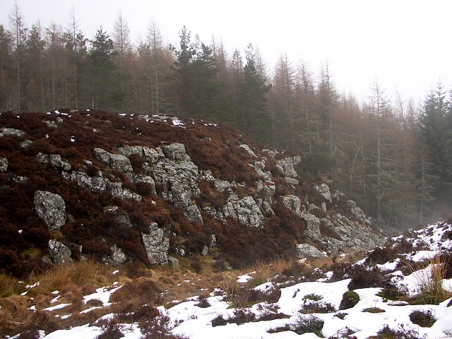 Rocks at forest edge