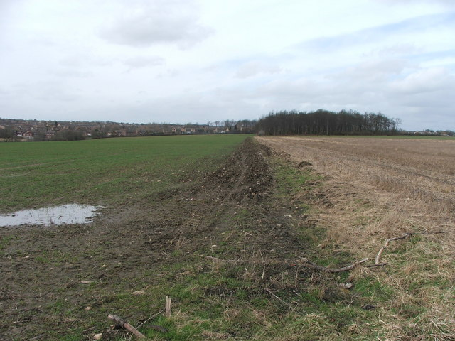 Farmland and small wood at Whinmoor.
