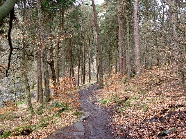 Woodland, Hebden Dale
