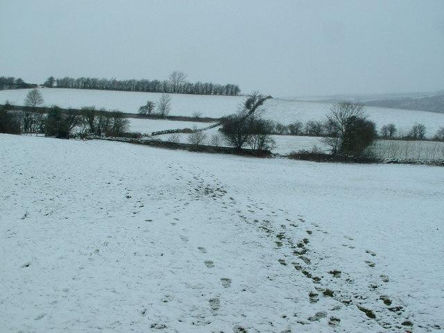 Snowy fields, Upper Hopton