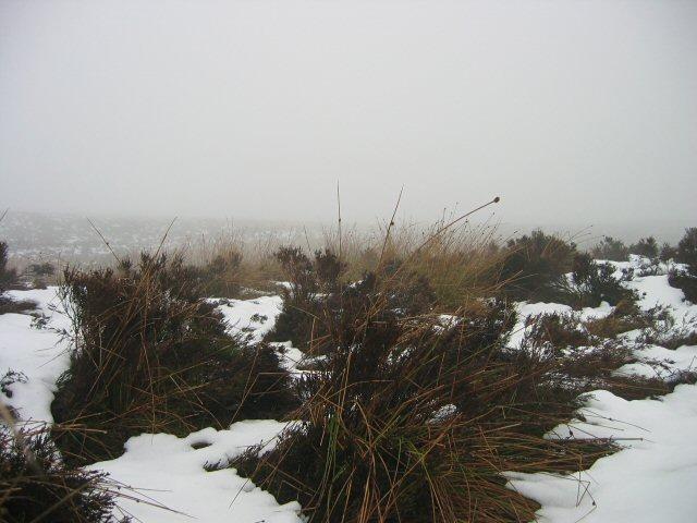 Snowy moorland