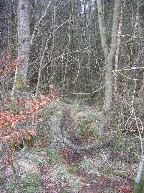 Deer track, Blawearie Wood