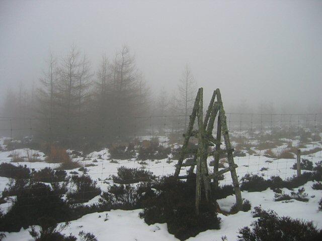 Forest stile