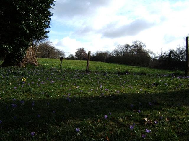 East Meadow Three Weeks On
