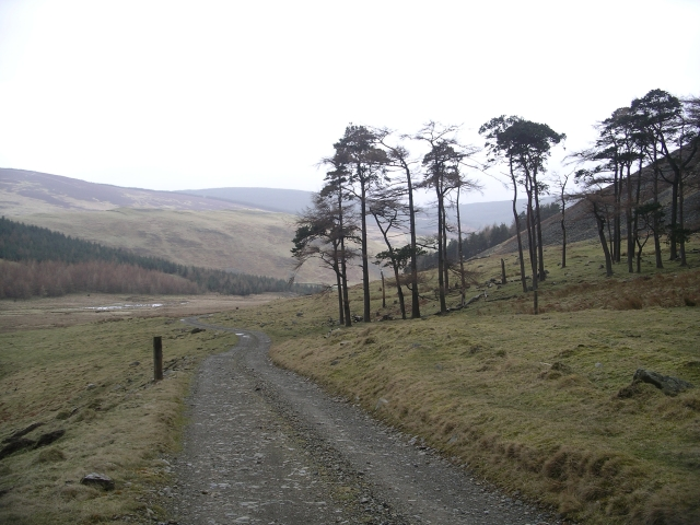 Pines and Larches on the track between Glenrath and Glenrathhope