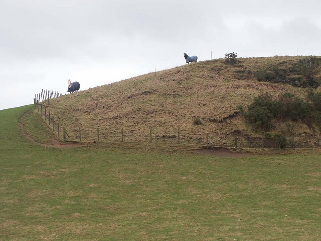 The Hill at Pitkinnie