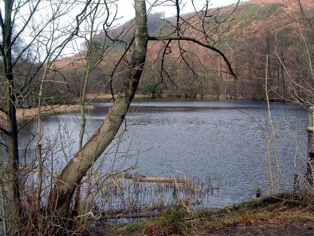 Dalshinnie Loch, Mabie Forest