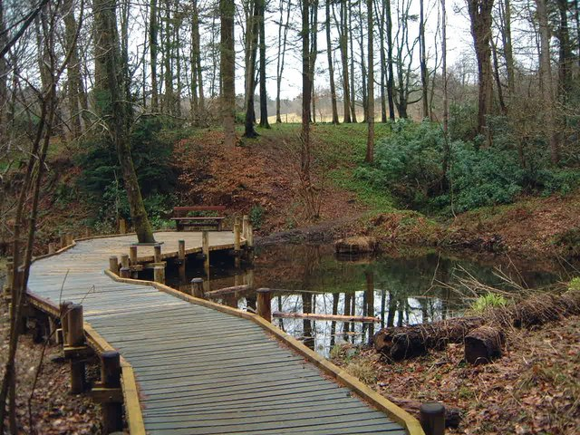 Boardwalk & pond, Mabie Forest
