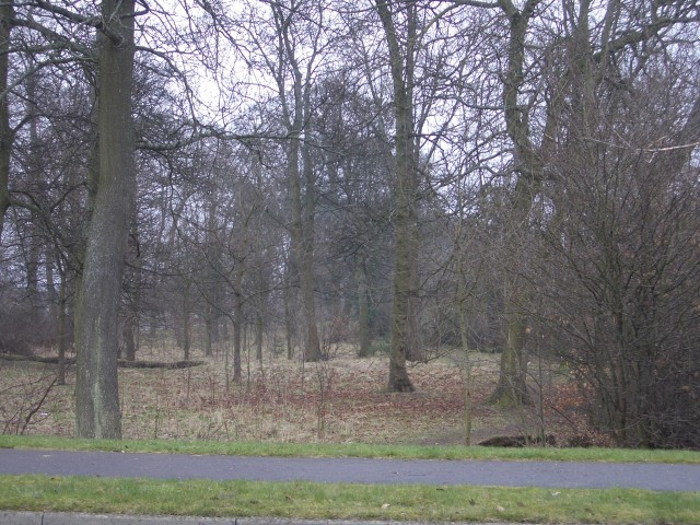 Woodland strip