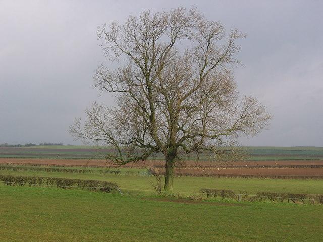 Farmland on the A614