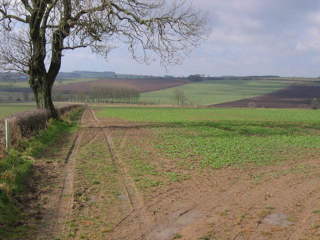 Harpham Field