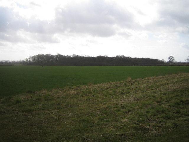 Aubourn Moor