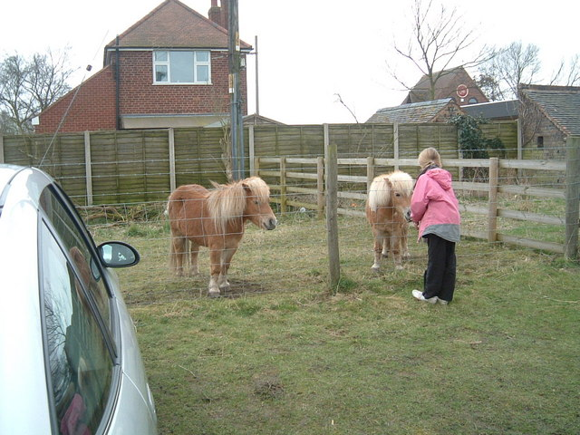Pony Feeding at Broomey Croft Children's Farm