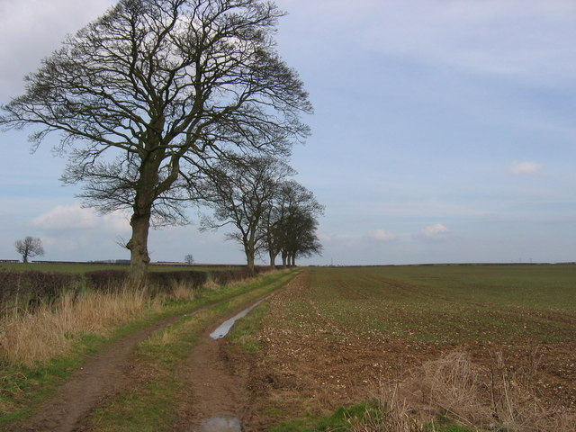 Track off Green Lane