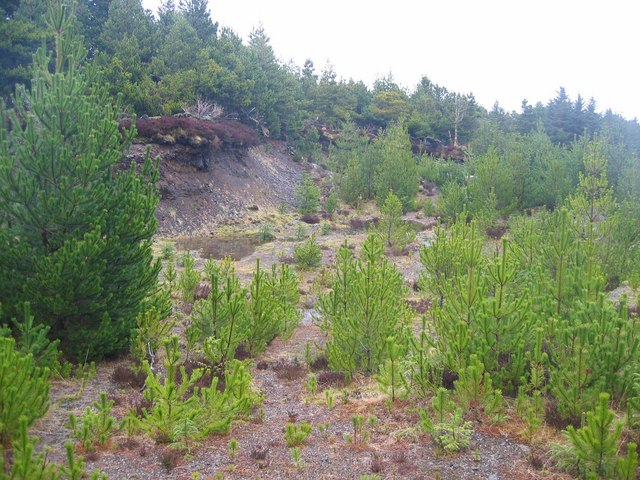 Self-Seeded Trees in Glen Brittle Forest