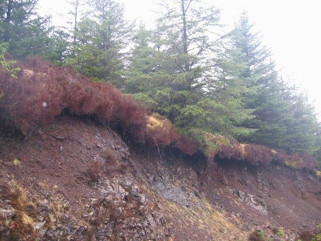 Undercut Tree