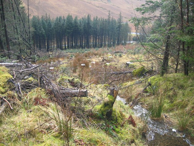 Clearing in Glen Brittle Forest