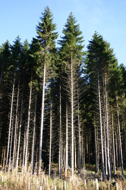 Bennachie Forest at Donview