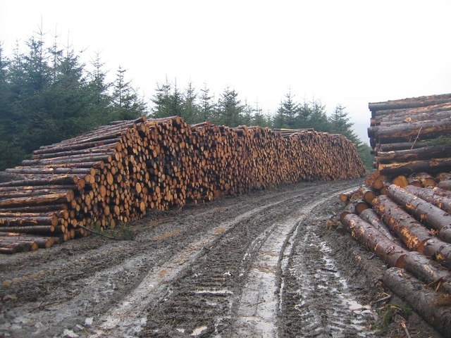Log Pile in Glen Brittle Forest