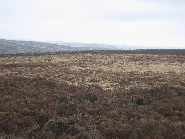 Moorland on Twin Law.